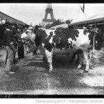vache-150x150