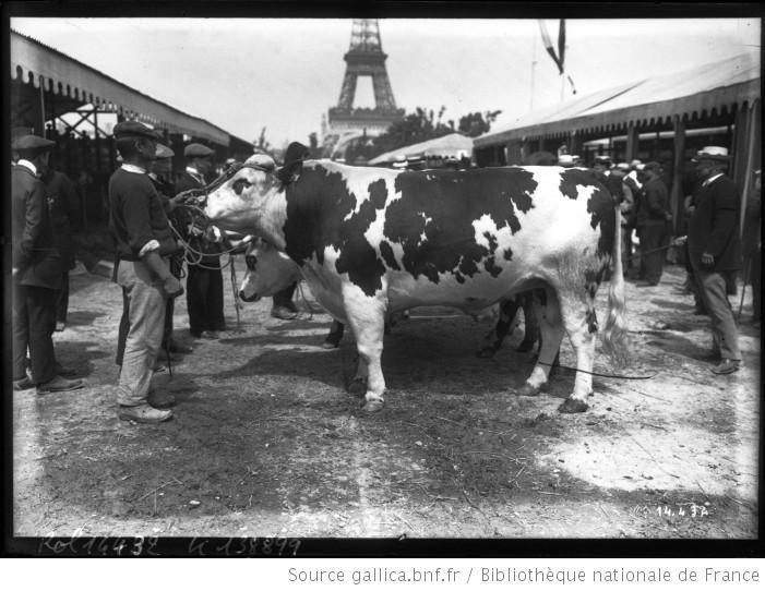 Kosmopolitique//Article//   SMS horribilis dans Kosmopolitique vache